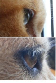 まつげ犬猫.jpg