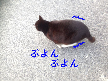 IMG_0536.JPG