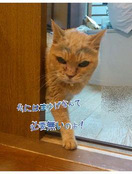 yurumojicamera2.jpg