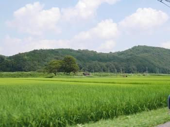平田観光農園2.jpg