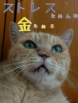 yurumojicamera24.jpg